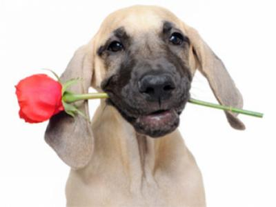 DOG_WITH_ROSE.jpg